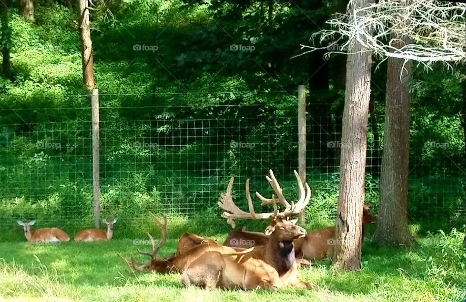 Penns Cave & Wildlife Park Elk