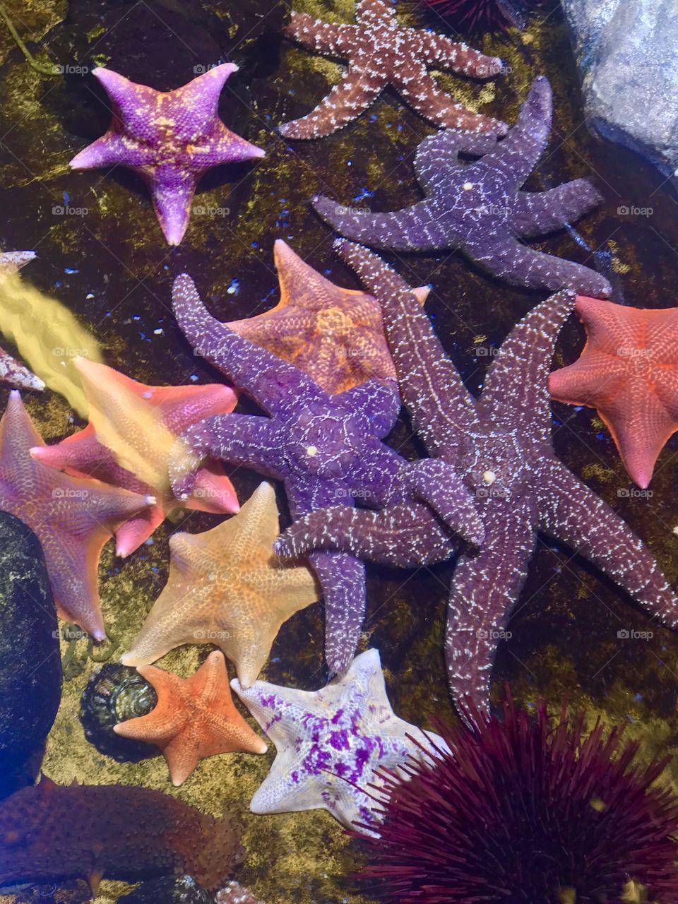 Starfish overload