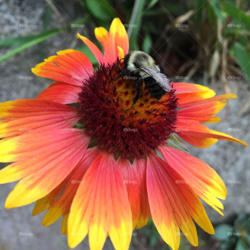 Like me, this bee clings to the last days of summer as the cold fall temps roll in.