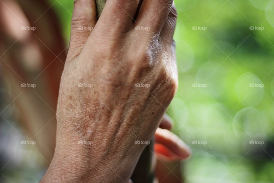 Aging hand of senior woman holding tree branch