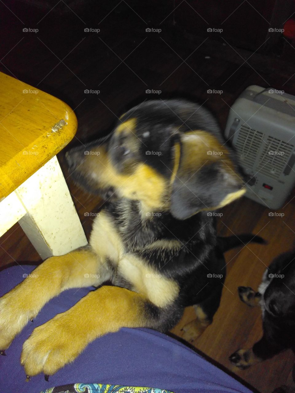 my little puppy is wanted to eat