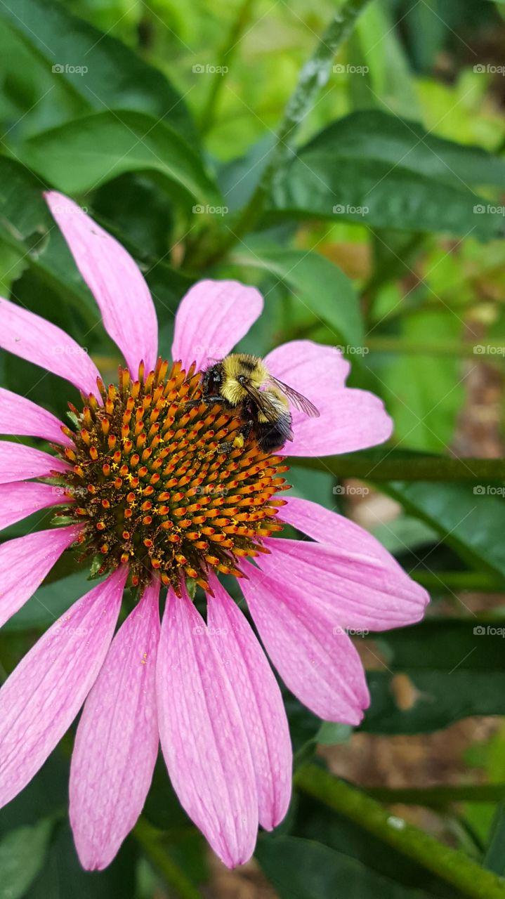 Close-up of big pink flower