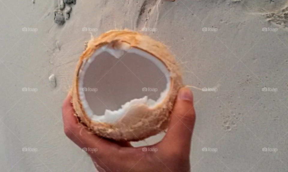 High angle view of hand holding coconut