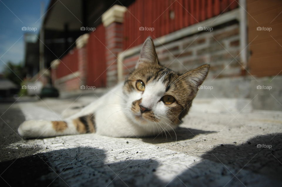 cute cat close up lying on the floor