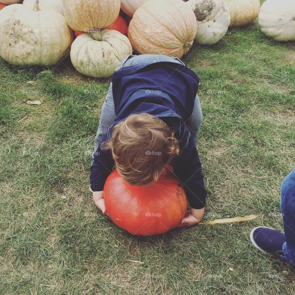 Toddler trying to pick up his favorite pumpkin