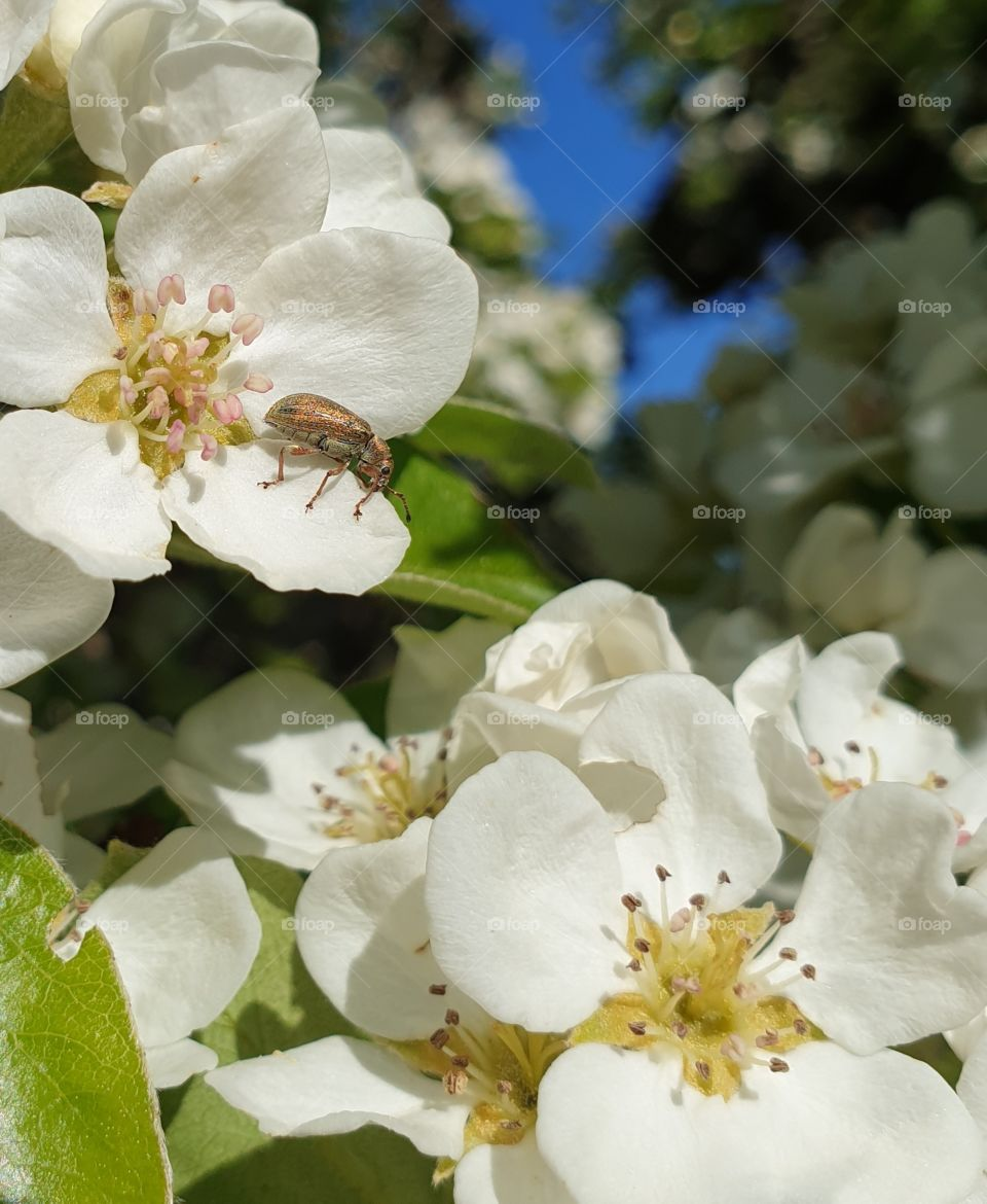 A beautiful insect on a white flower.