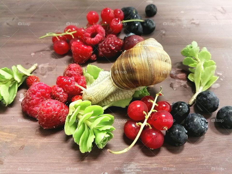 Snail on berries