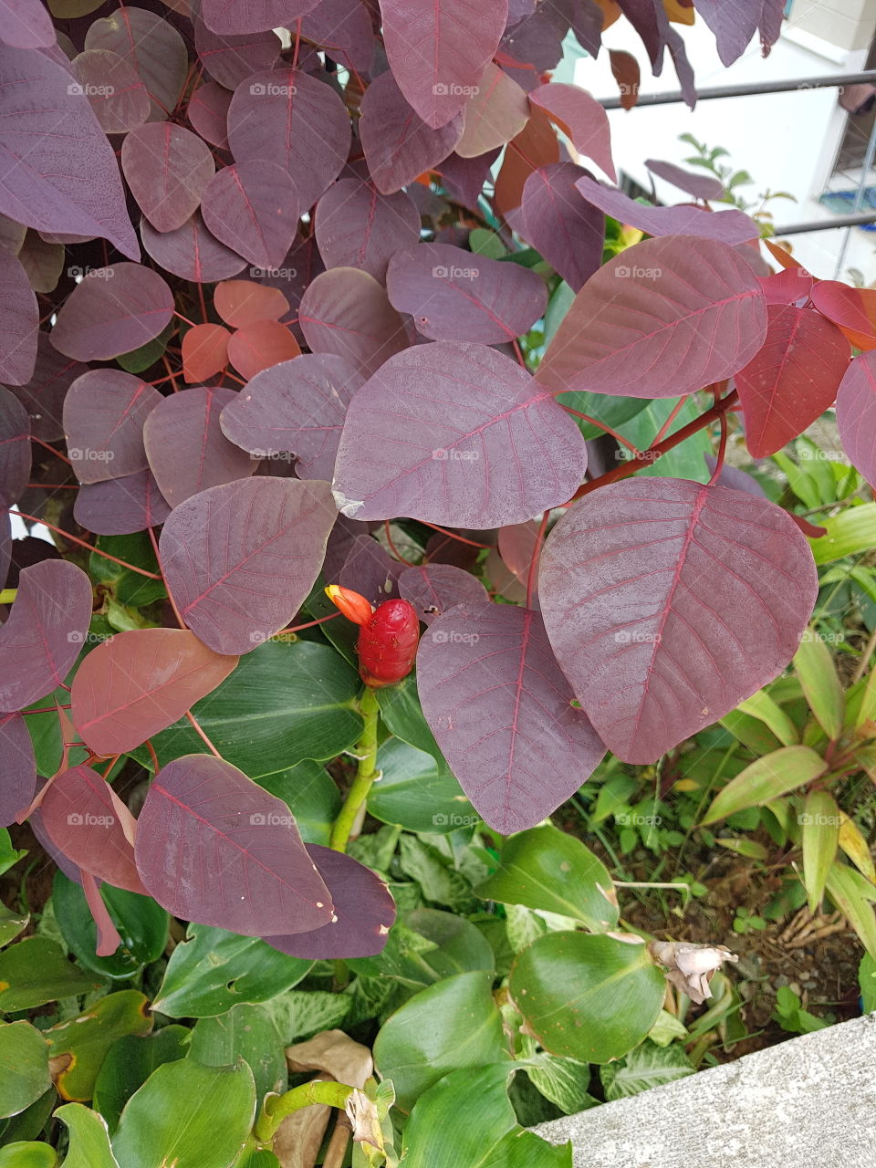 ornamental plants that make our environment attractive.