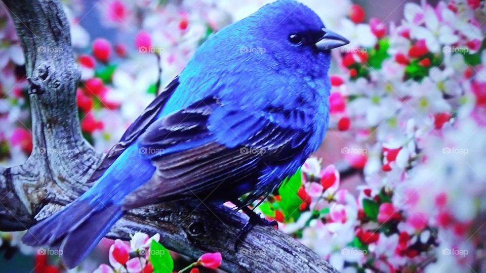 Bird, Nature, No Person, Wildlife, Flower
