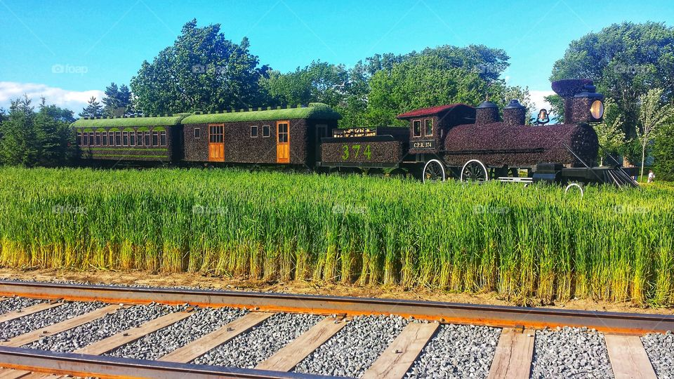 Train Covered in Plants on Beautiful Summer Day