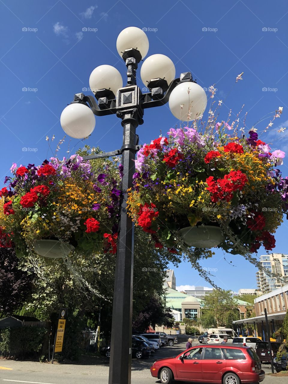 Beautiful Downtown Victoria Harbour Hanging Baskets