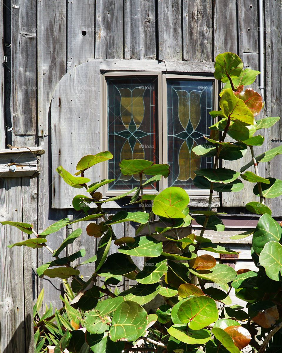 Sea grapes and stain glass window