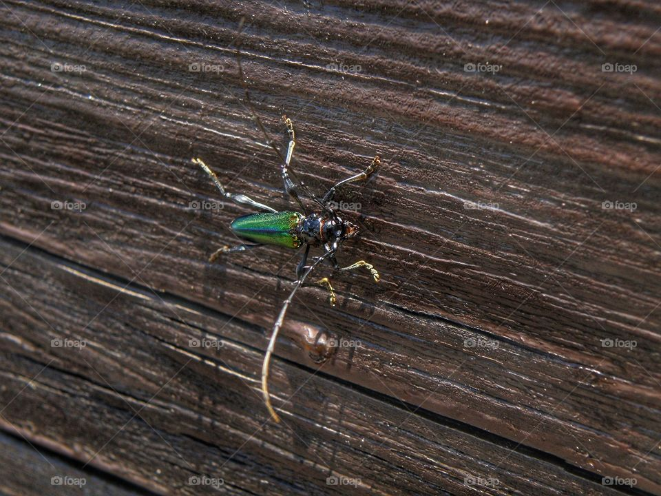 Insect on wood