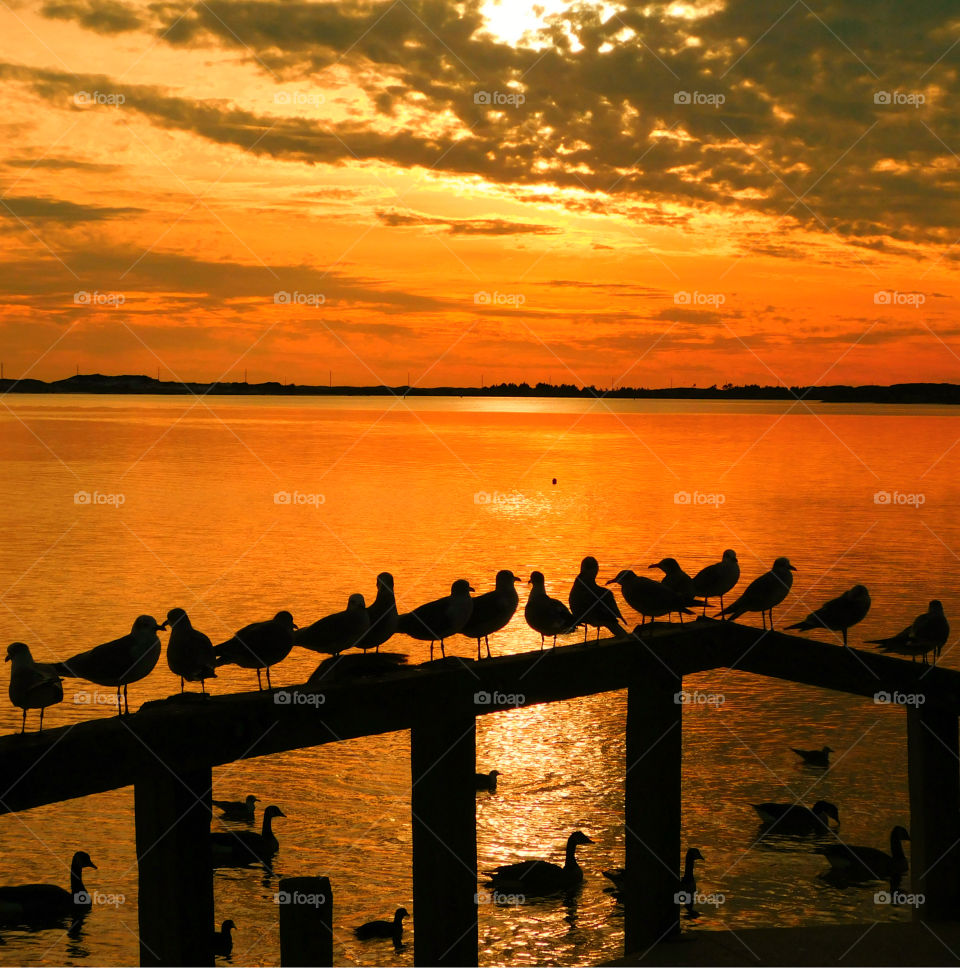 My hobby is sunset photography. Like the meeting of two worlds - the known and the unknown. The sun is like a big romantic; inspirational fire in the sky. Here, ruins of a historical pier play host to a flock of seagulls and ducks basking in the sun.