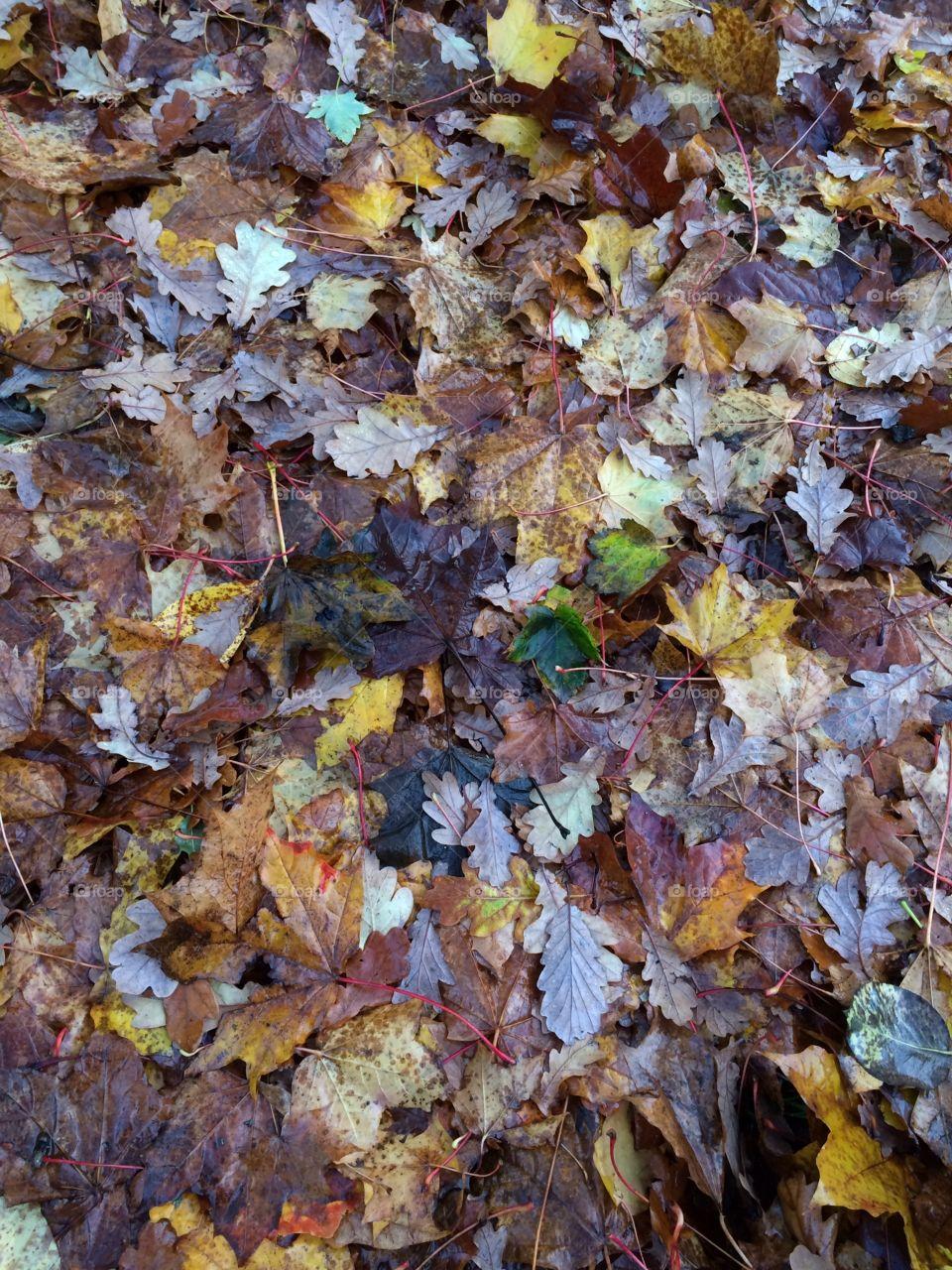 Autumn leaves, carpet.