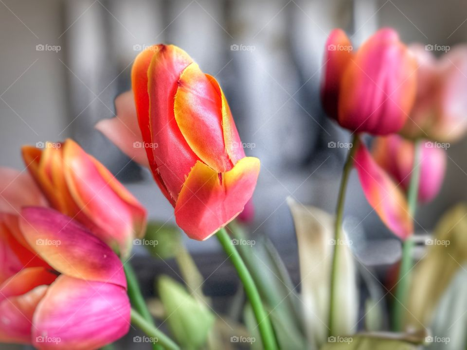 Happy Valentines with Tulips