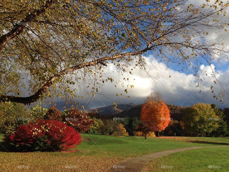 Beautiful view autumn trees near park