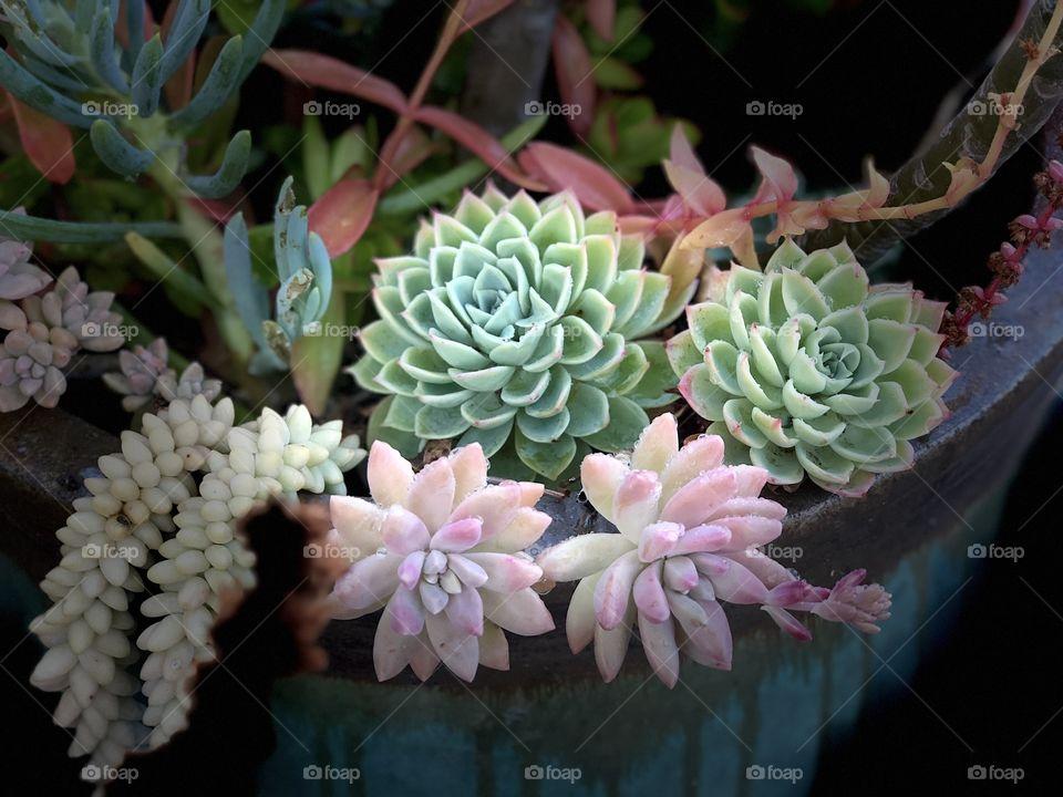 Beautiful Botanicals! Stunning Succulent Fine Art!