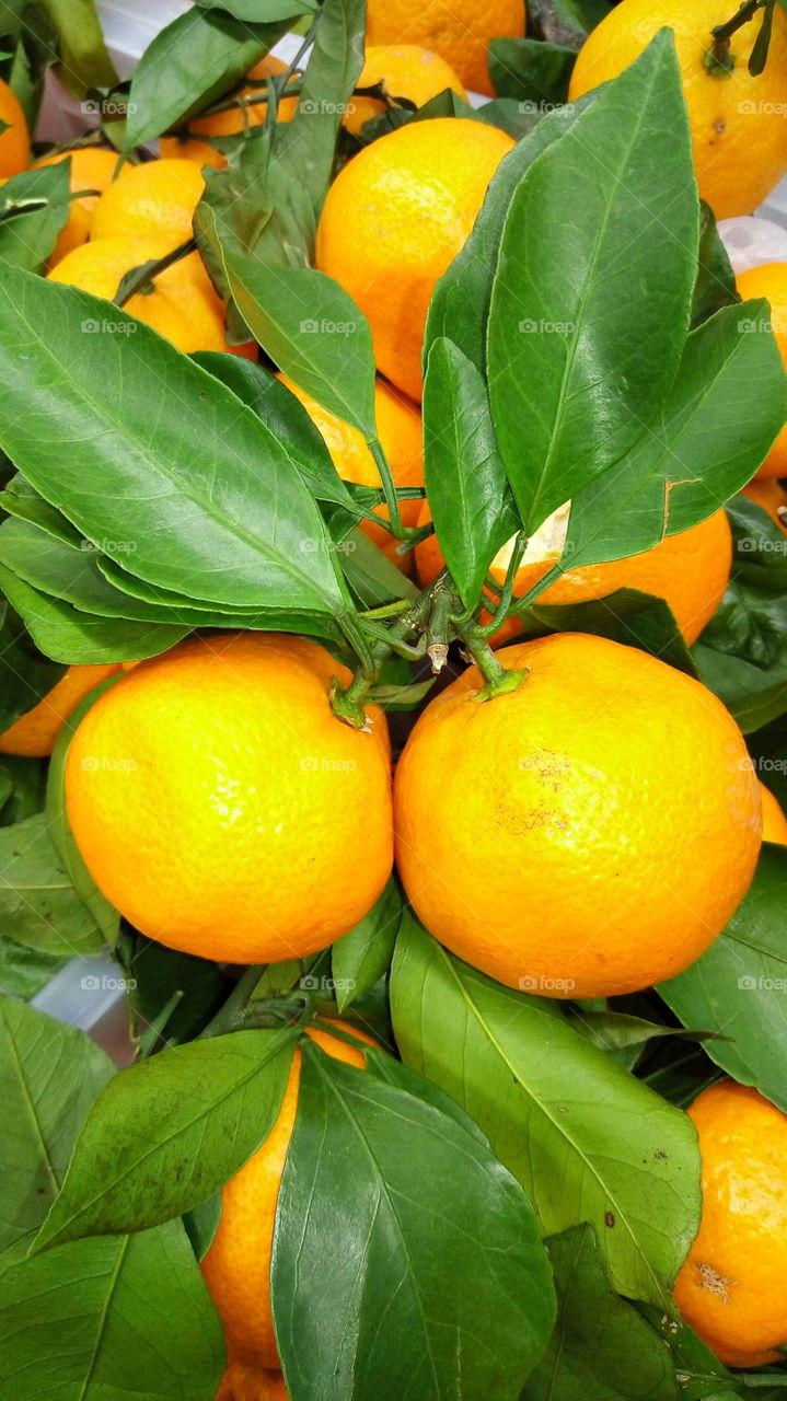 фрукты.мандарины.новый год