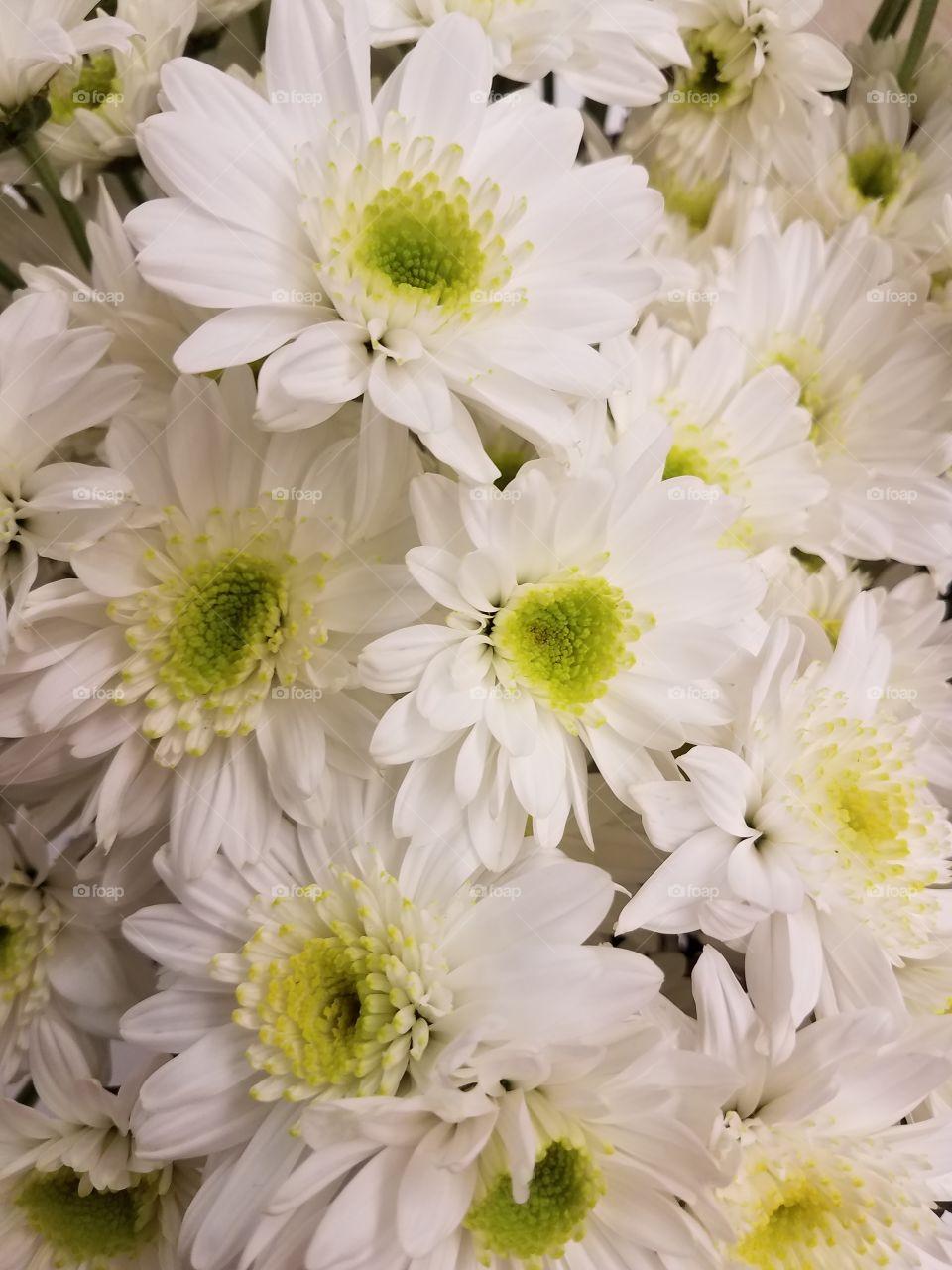 Full frame of white flowers