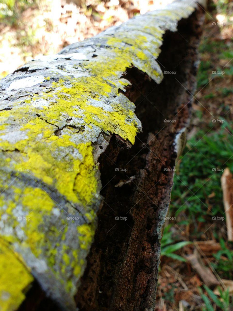 wood decay