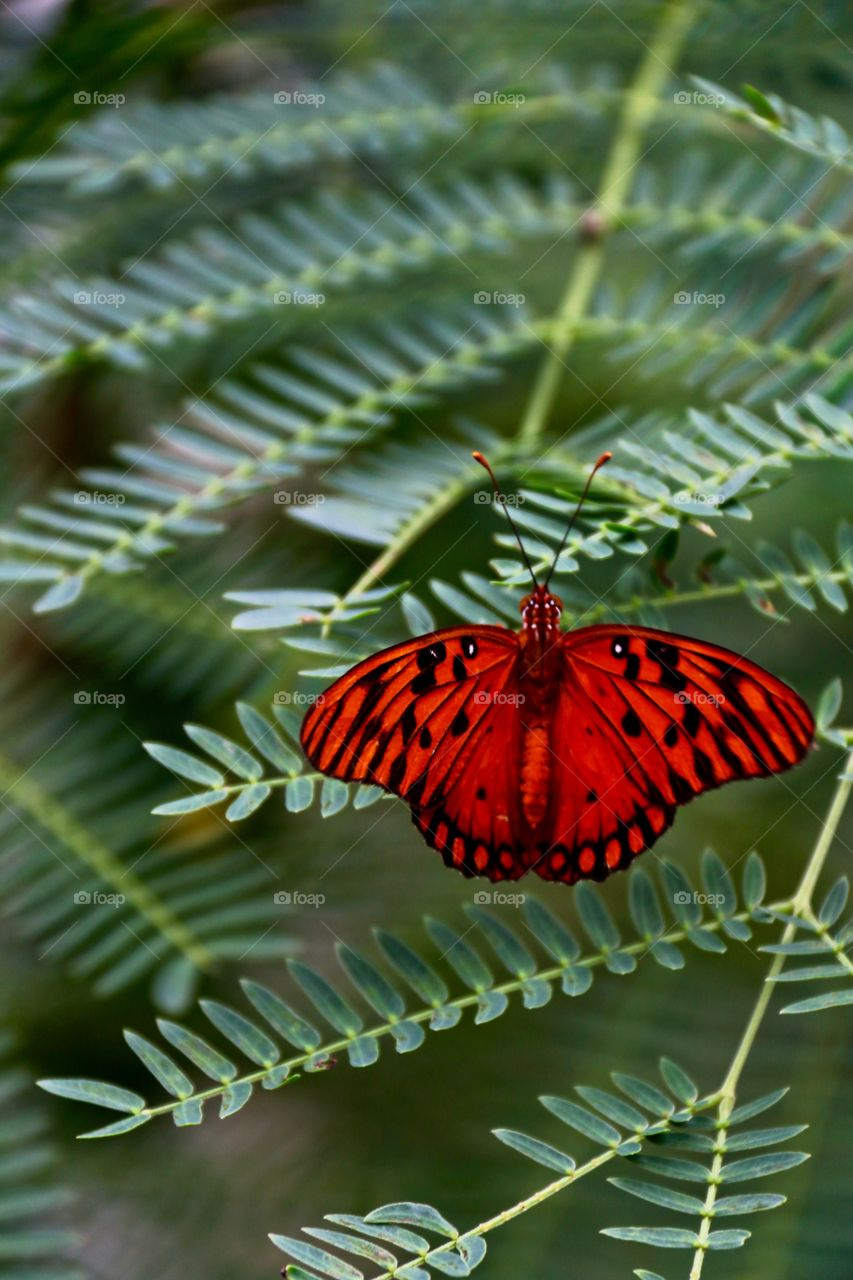 Bright vivid red butterfly on green fern leaves