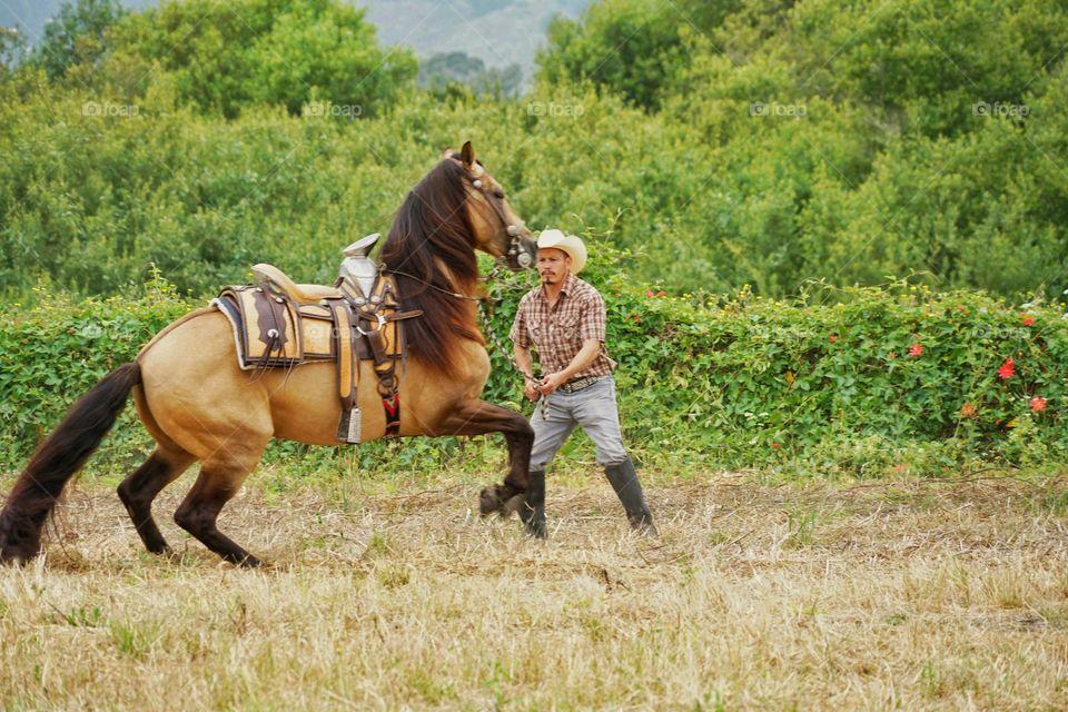 Cowboy Training A Horse On A Ranch