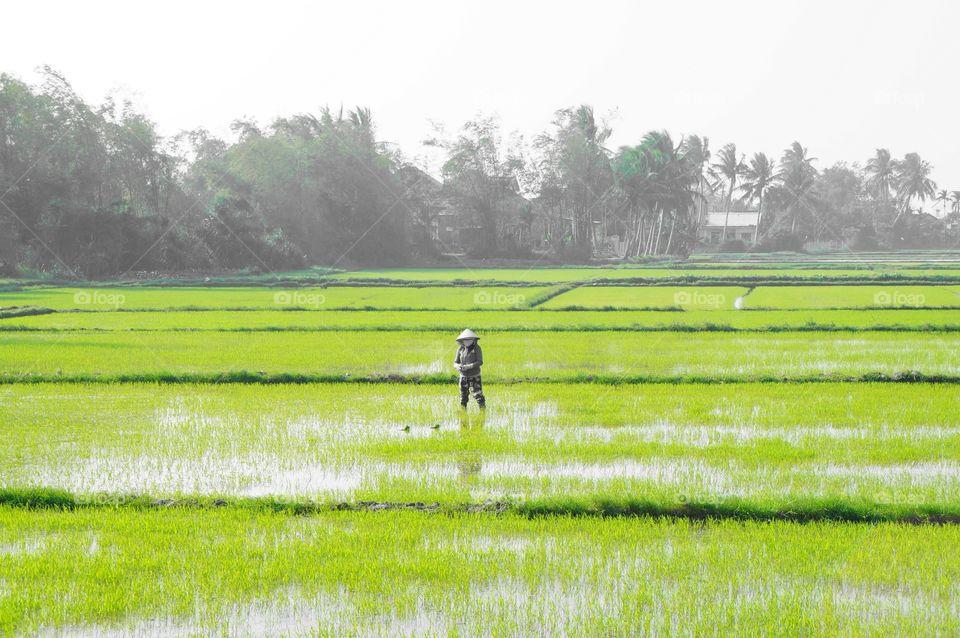 Landscape, Agriculture, Field, Farm, Rural