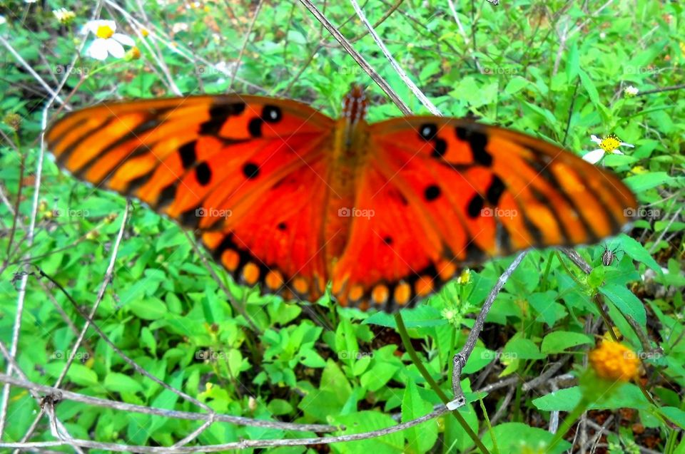 Beautiful Butterfly Back View