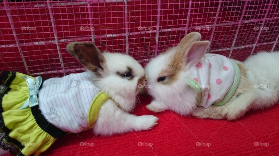 Bunny wuv 💞. These two cuties are in wuv in their cute little dresses.