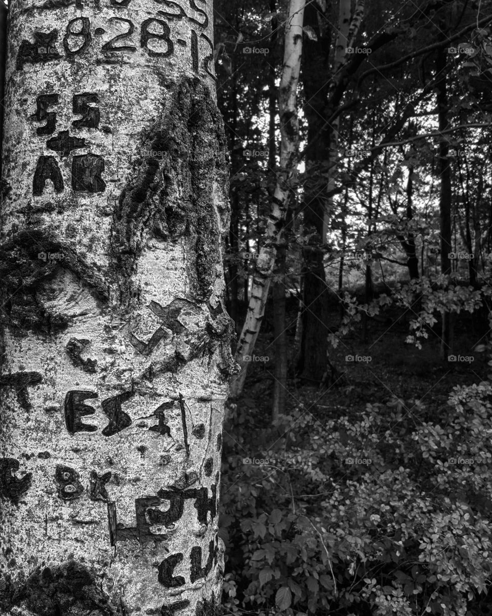 carved names of long ago