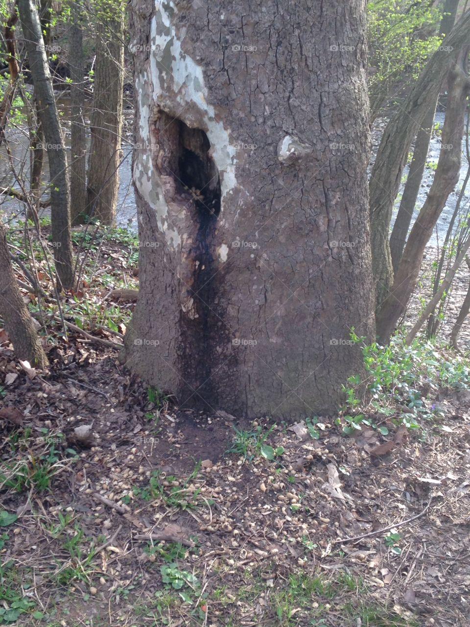 Squirrel stash in the park. Squirrel stash in the park
