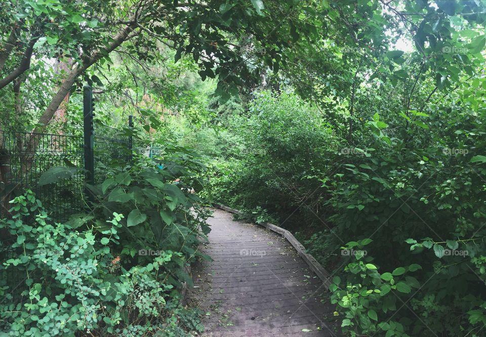 When the path reveals itself, follow it