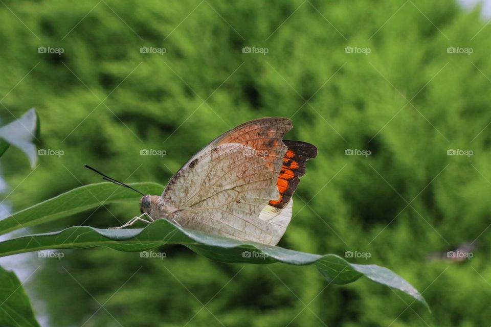 A brown and orange butterfly resting on a branch macro closeup