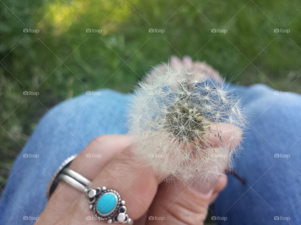 Handful of Wishes