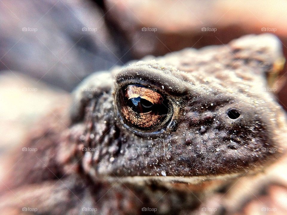 Extreme close-up of toad