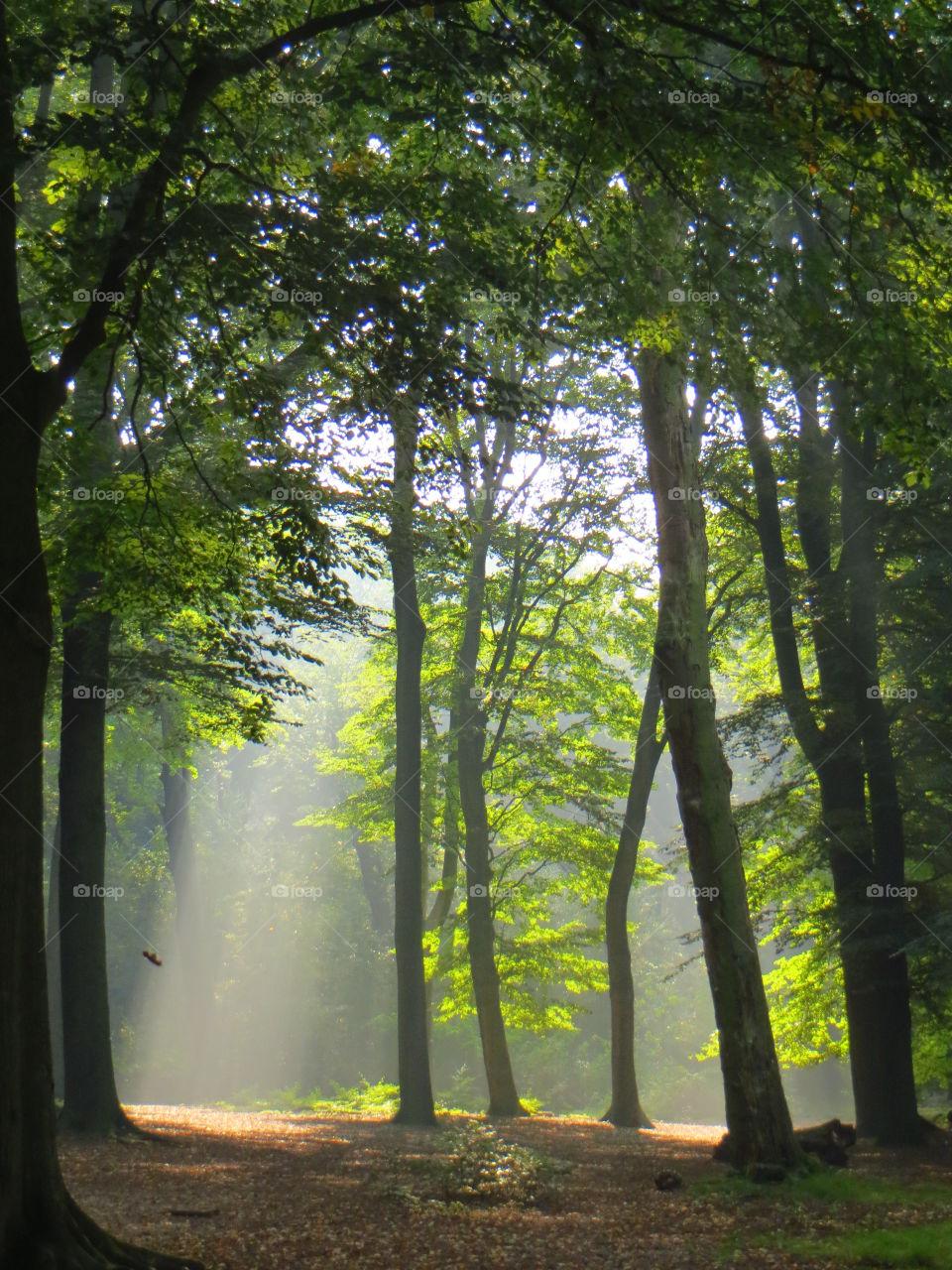 Sunlight through green woods