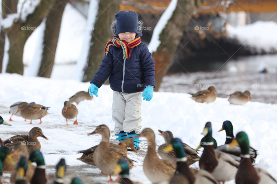 little boy feeds birds winter