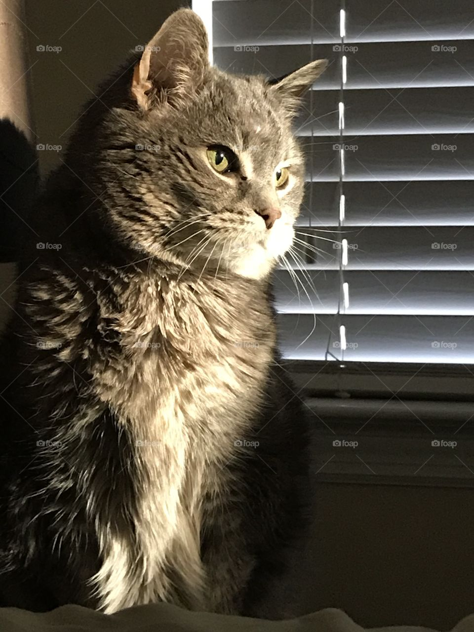 Sun light peering through the window onto a cat.  Beautiful cat picture for people who love cats.