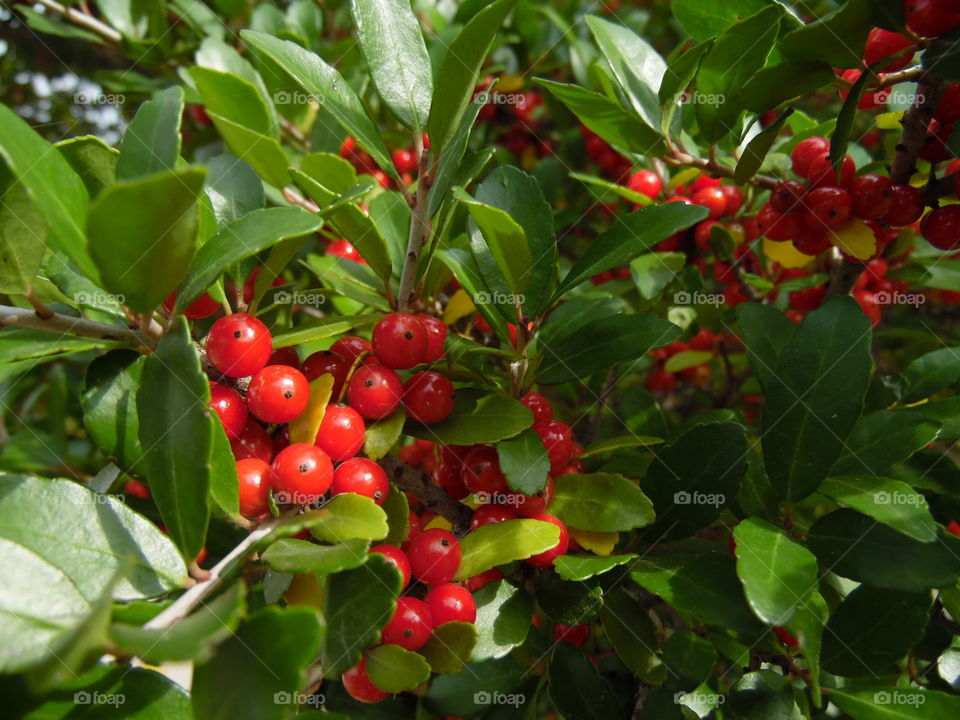 berries. This is a picture of a berry tree