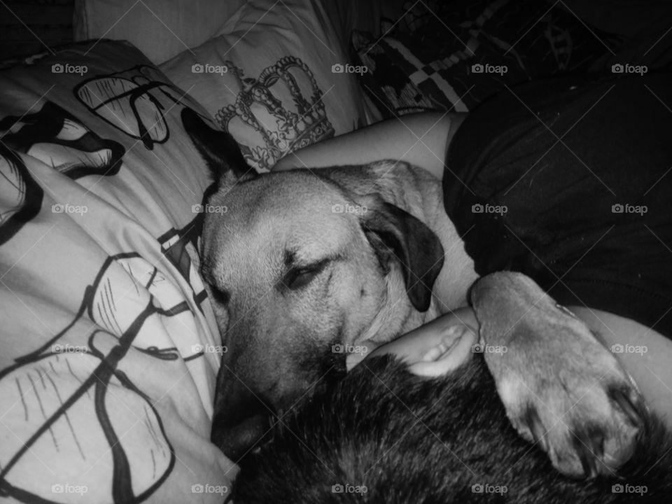 Sleepy Doggo