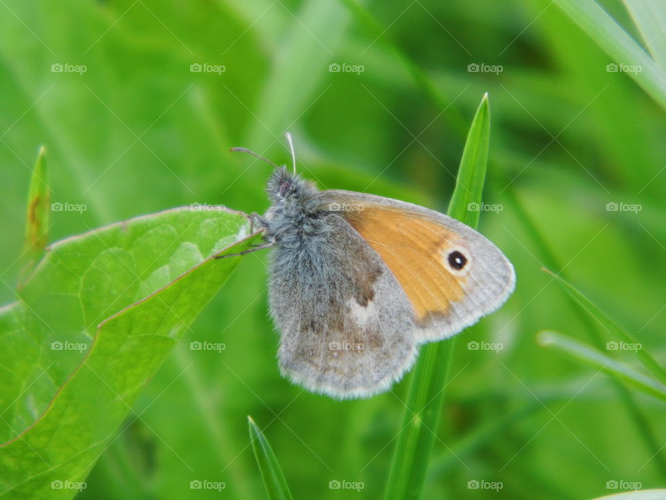 butterfly in the garden and green grass background