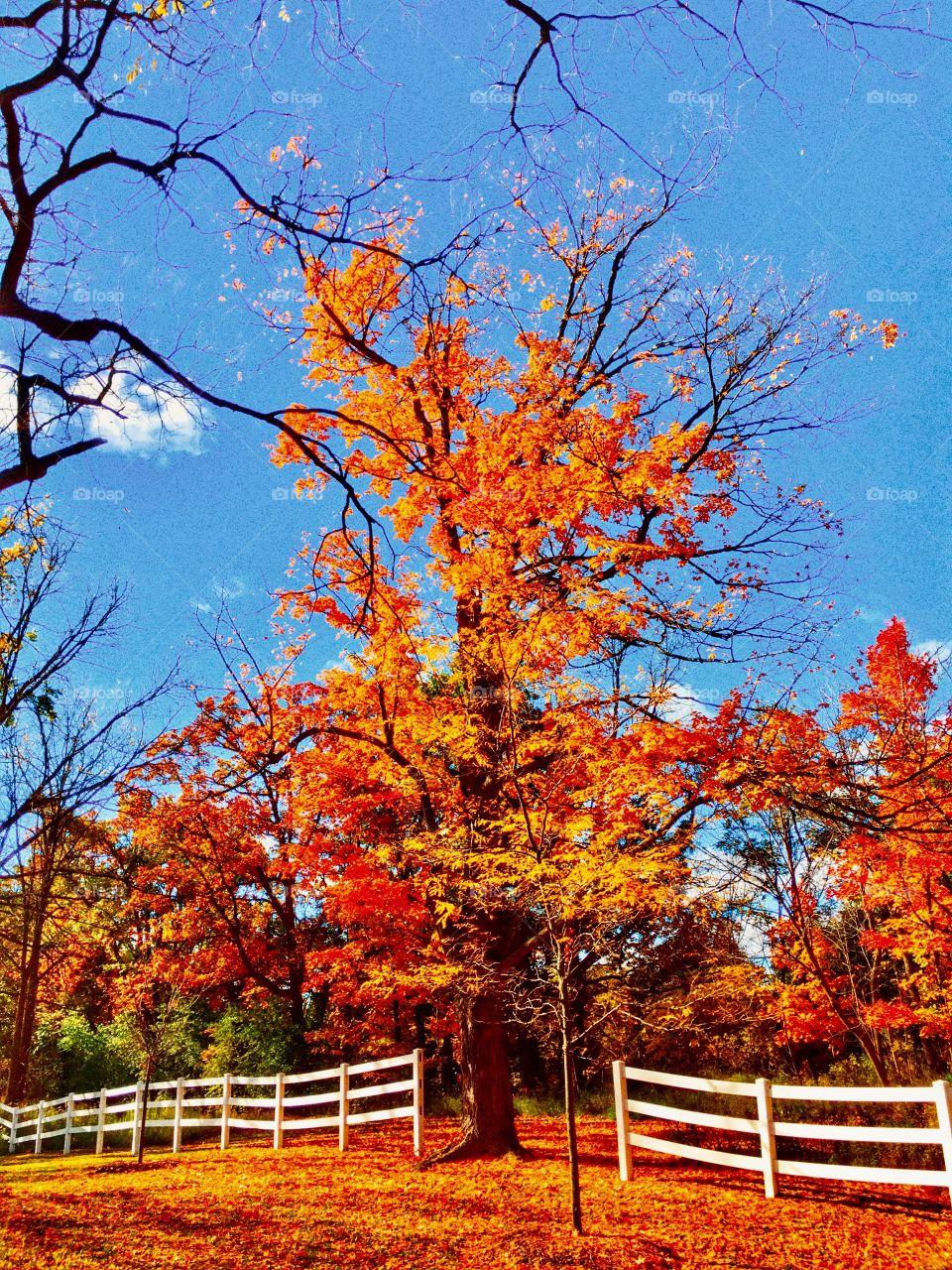 Blinding autumn in MI