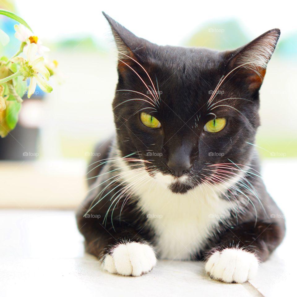 Cat, Kitten, Cute, Fur, Pet