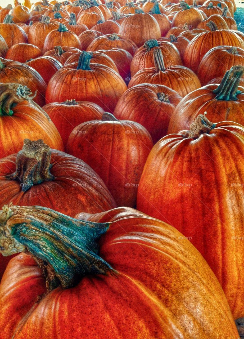 Autumn is here! Pumpkin patch