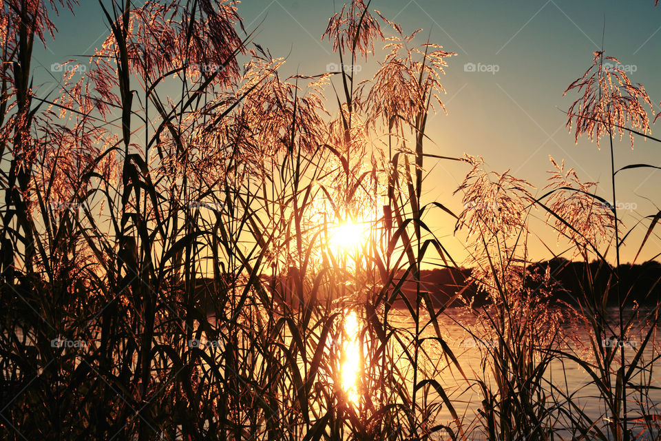 Silhouette of grass in lake