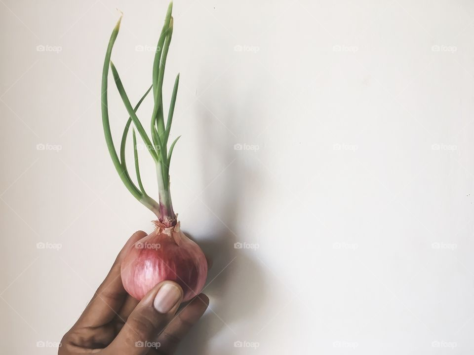 A person hand holding onion