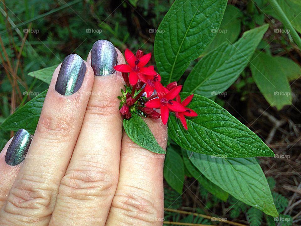 Gardening-hand admiring red flowers is the garden.