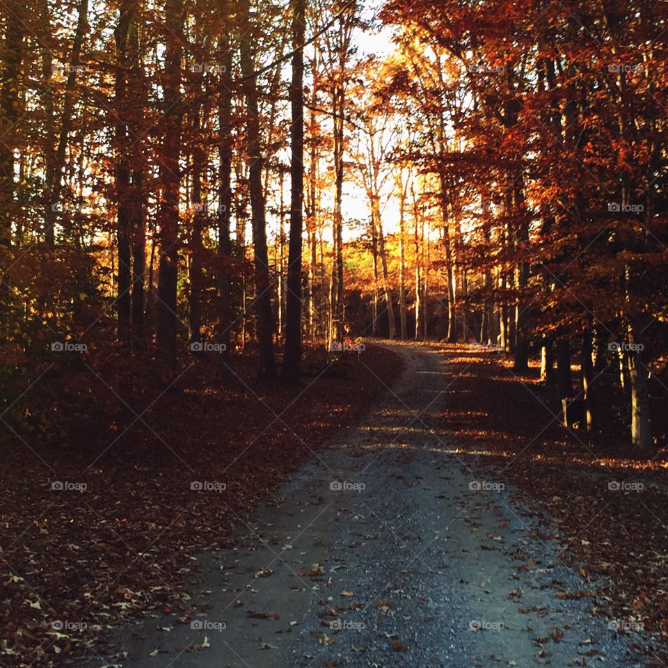 Quiet Road. A walk on a quiet tree lines rural road, surrounded by swirling and fiery leaves