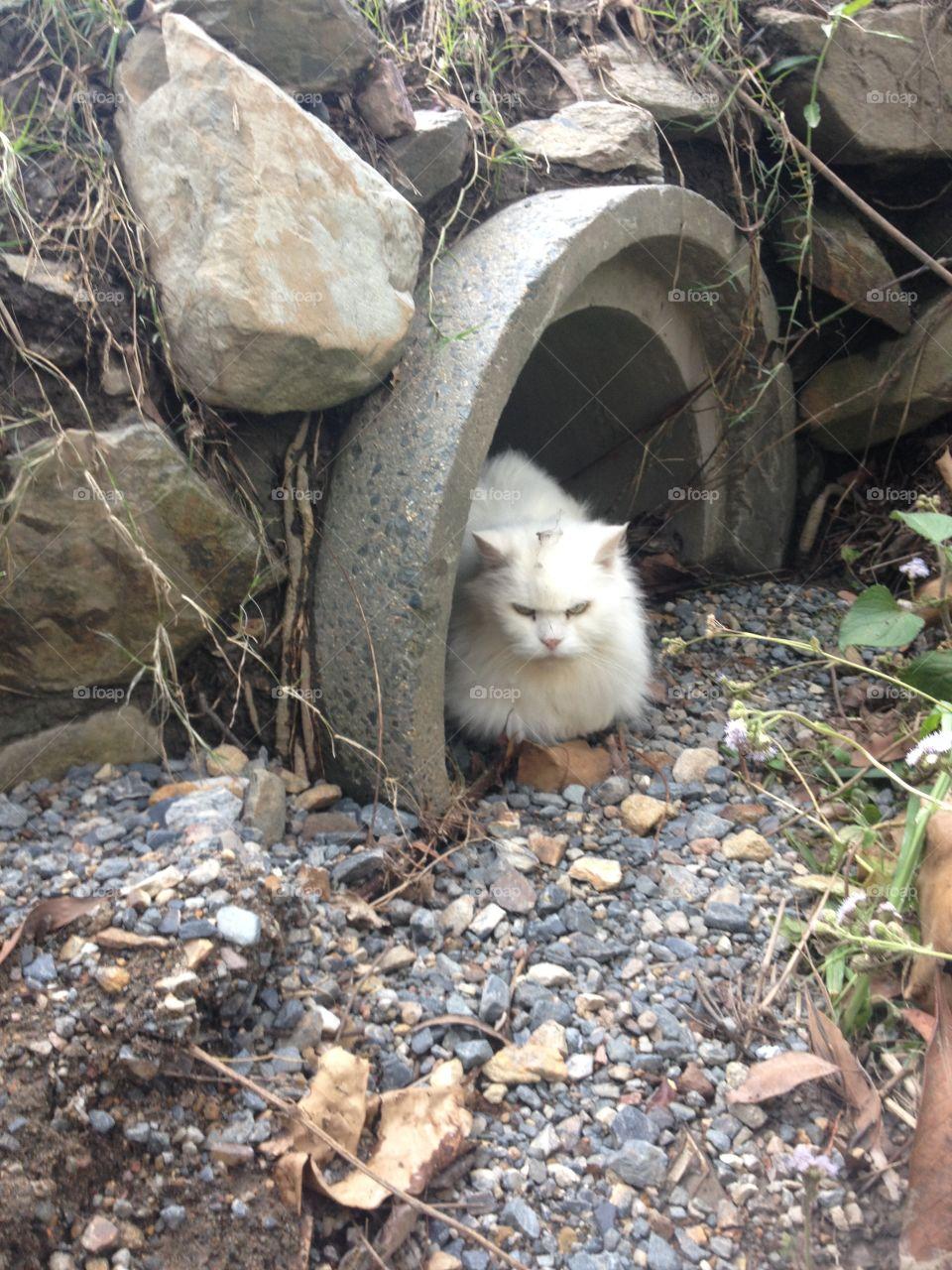 Cat in the drain